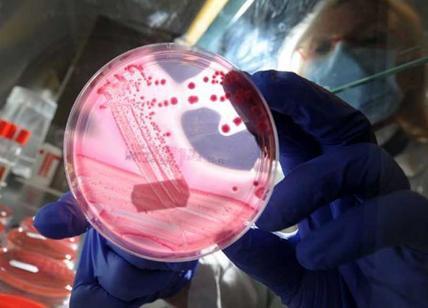 Batterio potenzialmente molto pericoloso sulla nostra pelle: ecco di cosa si tratta
