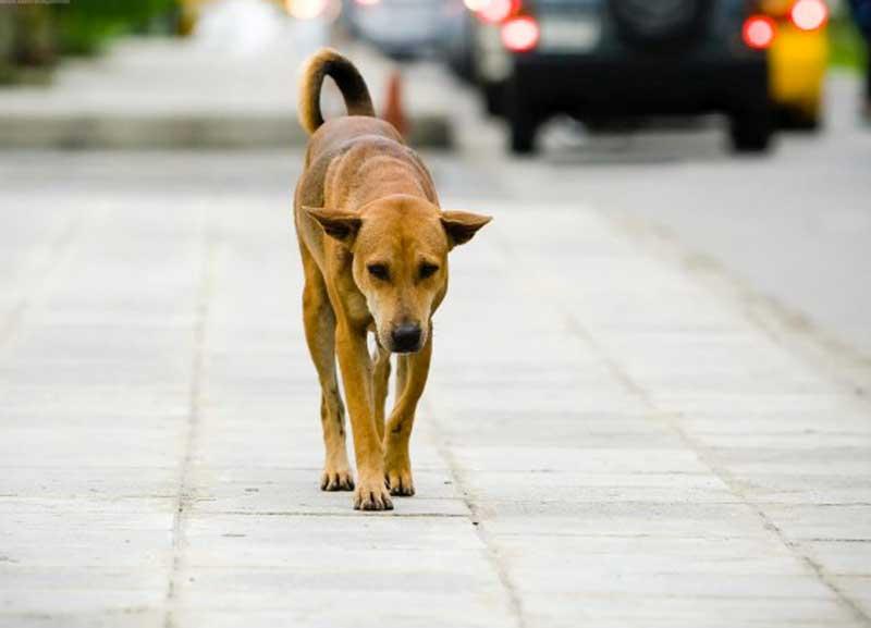 Bilancio: spunta tassa comunale per cani non sterilizzati
