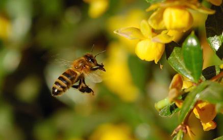 Miele, l'Ue secondo produttore al mondo. Ma import dalla Cina