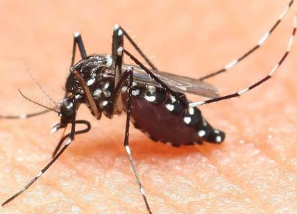 Allarme Zika a Miami, test a tappeto: situazione