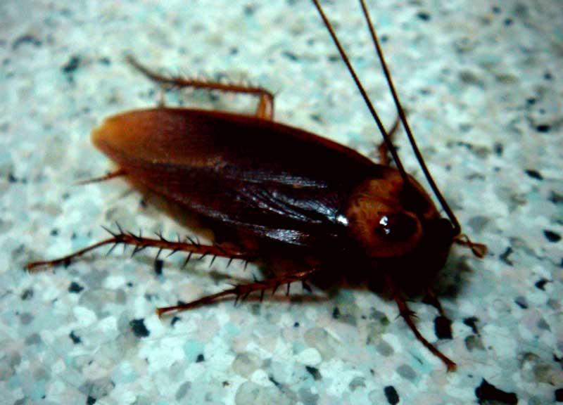 Indice animali infestanti insetti striscianti mangiapane nelle