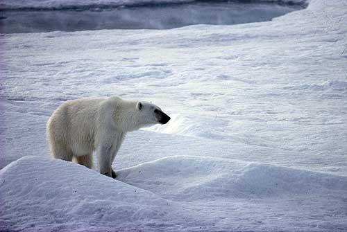 Onu, allarme cambiamenti climatici. Riscaldamento peserà su fame e migrazioni