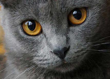 Uccide il gatto mettendolo in lavatrice e se ne vanta su Instagram