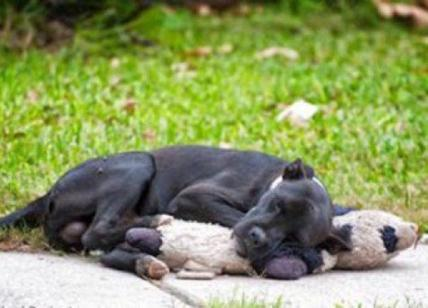 Cane abbandonato che abbraccia un pupazzo: la foto che ha … – Affaritaliani.it