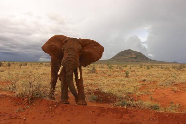 Un turista italiano di 66 anni e' morto in Kenya, calpestato da un elefante