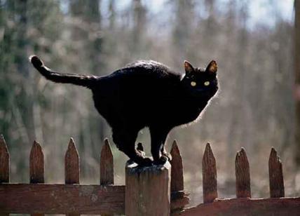 Gatto Nero E Specchi Rotti Spiegato Perché Siamo Superstiziosi