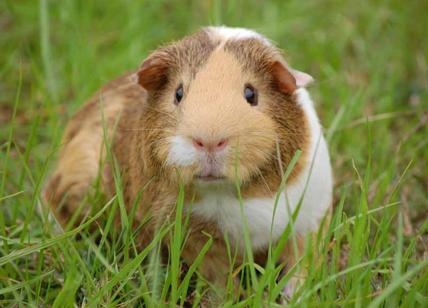 Animali per sperimentazioni in calo ma i numeri fanno ancora discutere