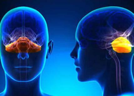 Statale e istituto besta per la formazione nelle neuroscienze la