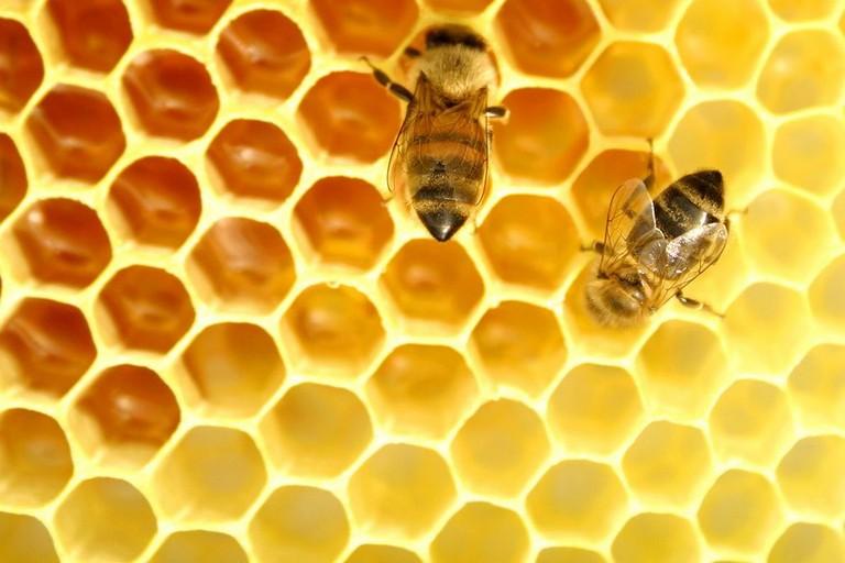 maschere di pene di miele online
