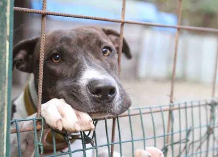 Allevamento-lager nel veronese: sequestrati 180 cani perché segregati in condizioni terribili