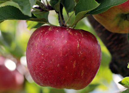 Diete Veloci 10 Kg In 2 Settimane : Dieta della mela come perdere kg in settimane con la dieta