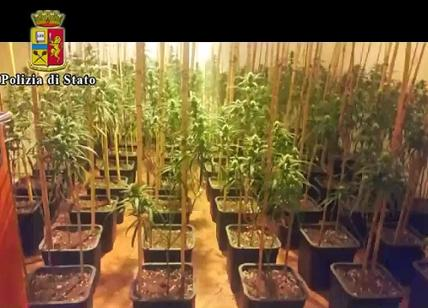 Brescia, scoperto traffico di marjuana da Italia a Inghilterra