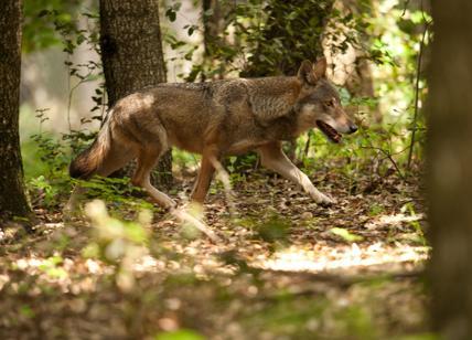 Rocca Priora: trovato nel centro storico un cane ucciso impalato