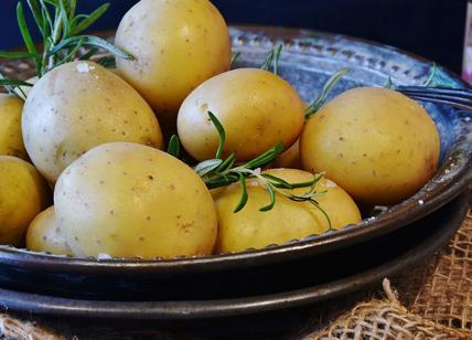 Diete Per Perdere Peso Velocemente Uomo : Dieta delle patate perdere kg in giorni la dieta veloce