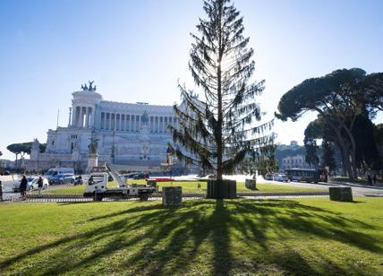 Albero Di Natale Roma 2019.Spelacchio L Albero Di Piazza Venezia L Ha Rotto Il Campidoglio