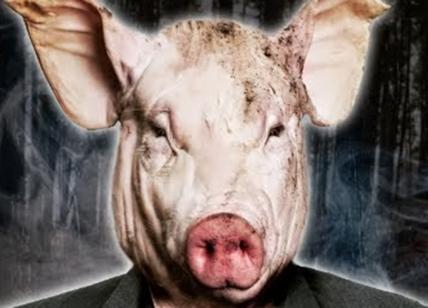 Creato un ibrido uomo-maiale per avere organi trapiantabili