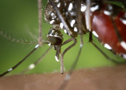 Virus del Nilo, a Viterbo infettati dei cavalli