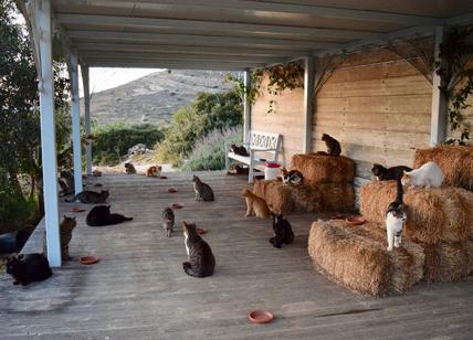 Gatti Cercasi Accarezzatore Di 55 Gatti Su Isola Greca Lavoro