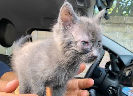 15 gatti lasciati senza cibo: colonia felina salvata dai vigili urbani di Roma