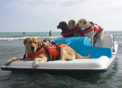 Il cane di salvataggio Romolo è andato in pensione. La storia strappalacrime