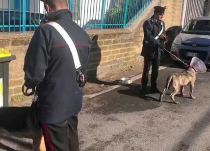 Cani feriti prigionieri in un ristorante cinese. Affidati al canile Muratella