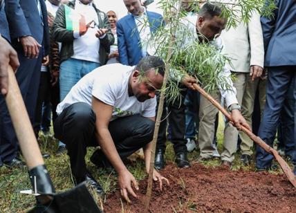 Sostenibilità ambientale, l'Etiopia pianta 350 milioni di alberi in 12 ore