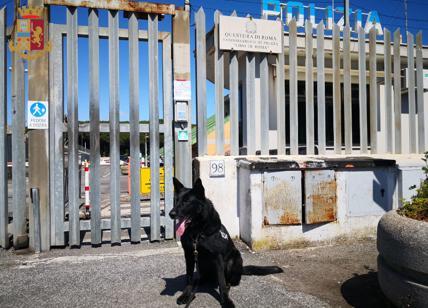 Il Cane Condor Colpisce Ancora Maxi Sequestro Di Droga E Pusher In