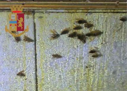 Ristorante degli orrori al Porto Fluviale: locale invaso da insetti, chiuso