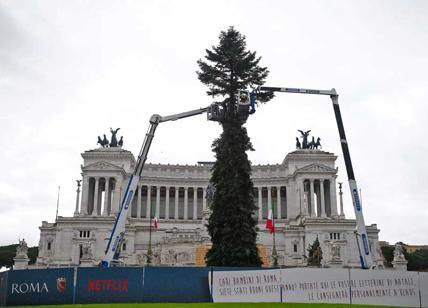 Albero Di Natale Roma 2020.Grandi Opere A Roma E Arrivato Spelacchio 2019 2020 L Albero Delle Risate Affaritaliani It