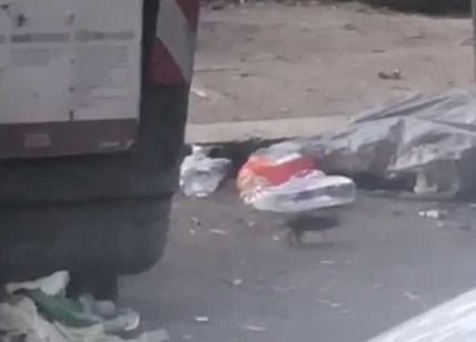 Rifiuti Roma, la nuova emergenza sono milioni di topi. Video a corso Trieste