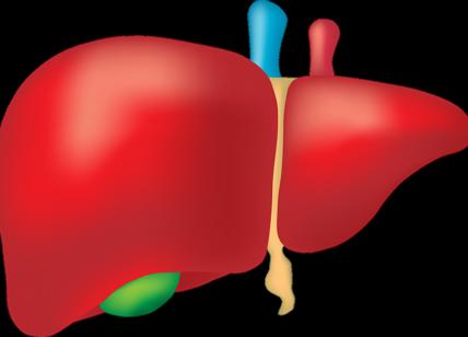 dieta ricca di transaminasi di fisterrante