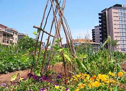 """""""Raggi come Attila, dove passa lei non crescono più neanche gli orti urbani"""""""