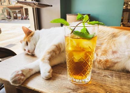 """Crazy Cat Café Milano in crisi dopo uno """"scherzo"""" social e recensioni false"""