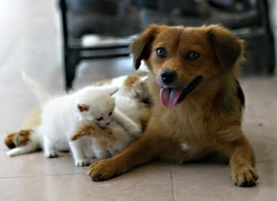 Animali, i cani sono più intelligenti dei gatti. Lo dicono i neuroni